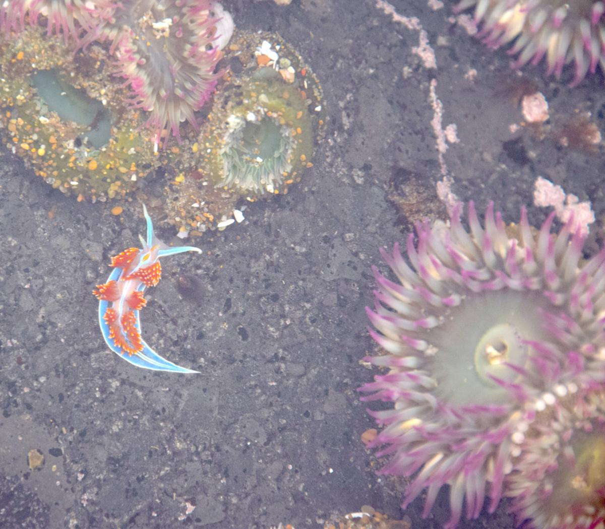 191011_oct_Tide poooling trips offer the chance of amazing discoveries.jpg