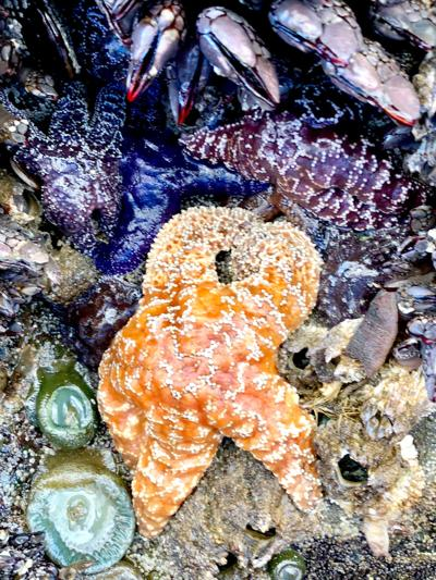 190607_oct_Tidepool Discovery Day2.jpg