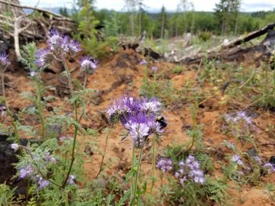Listening to the Land: Preserving pollinators on Oregon's North Coast