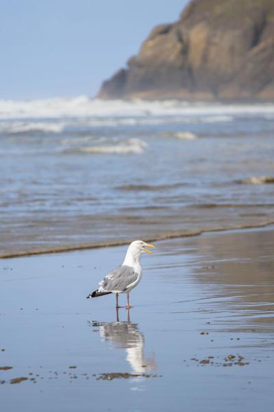 Seagull (copy)