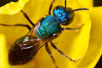 Out & About: Biodiversity often buzzes under our radars