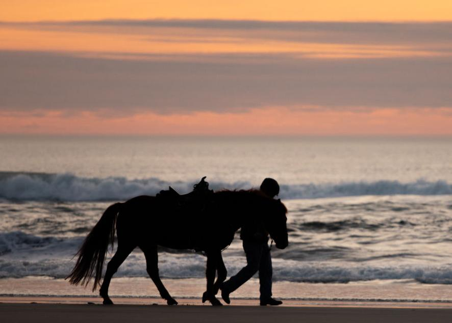 Sunset with horse at Fort Stevens