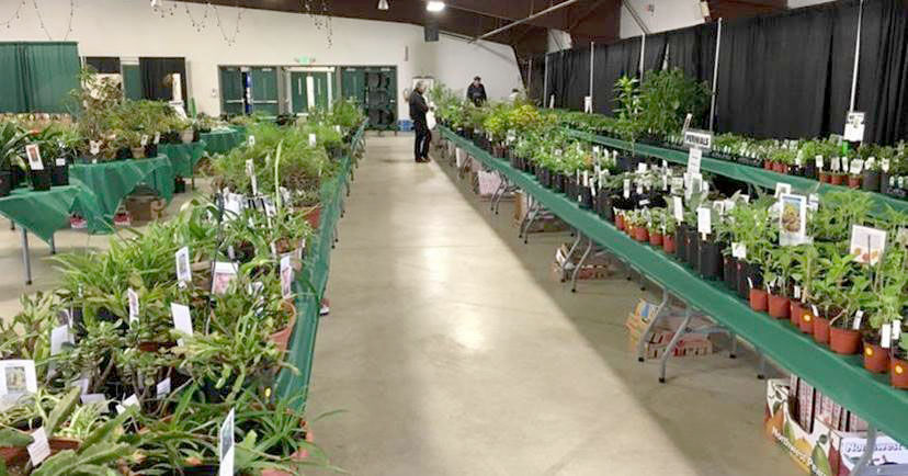 Two gardening groups hold plant sales Saturday