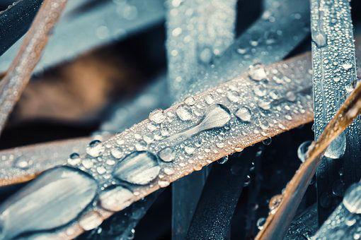 leaf wet.jpg