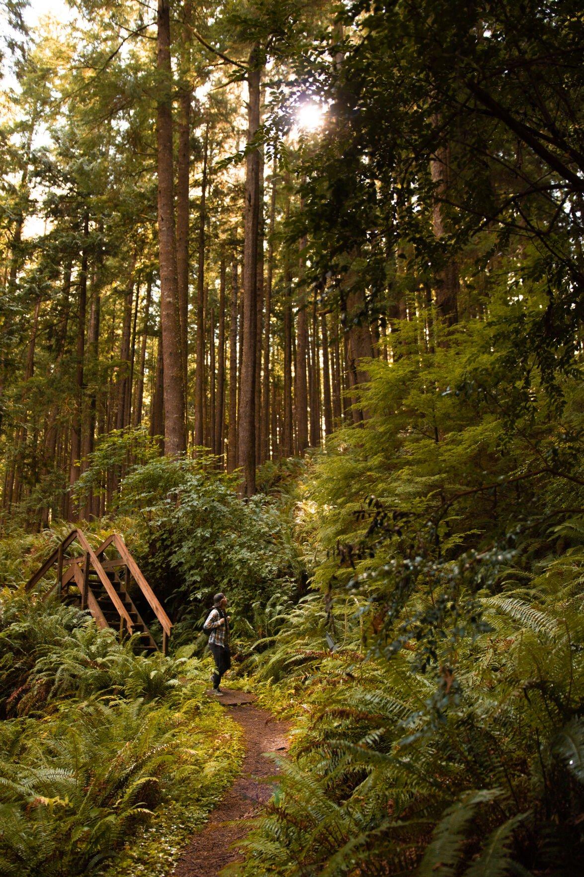 Willapa trail 1