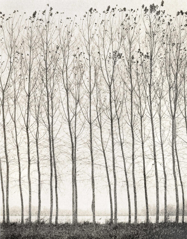27_Domenico Foschi_Poplars.jpg