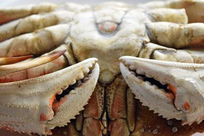 Dungeness Crab (stock)