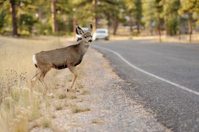 Be aware of deer along highways