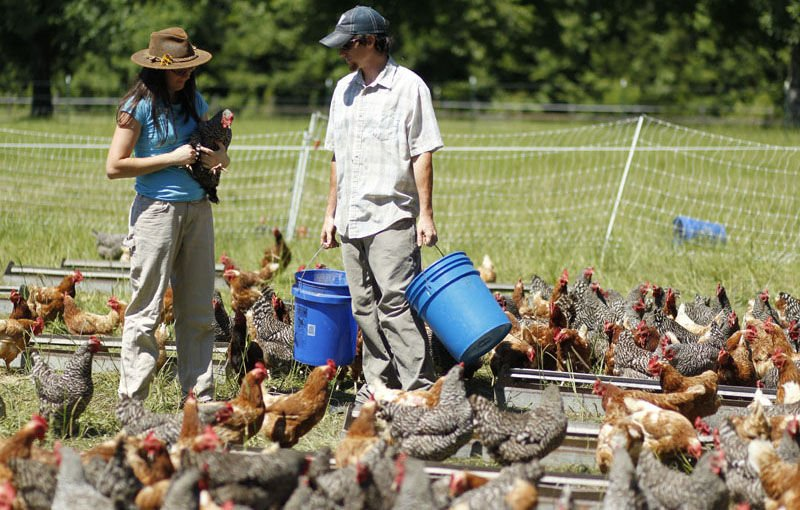 Young farmers' plight: State regulations hinder sustainable chicken farm's sales