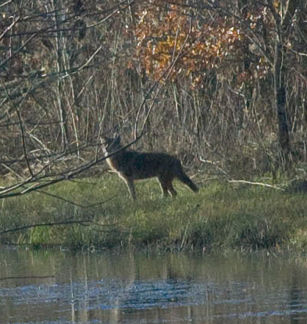 Hunting: a first time experience
