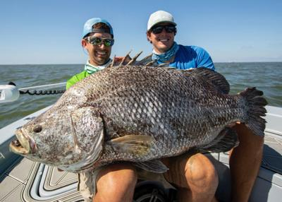 Tripletail Fish Catch