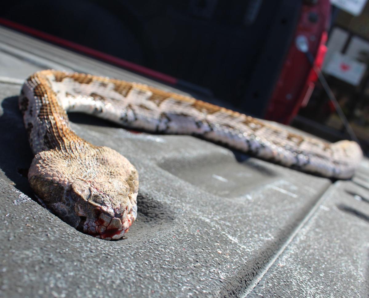 mcj-2020-07-08-news-snake-safety-secondary