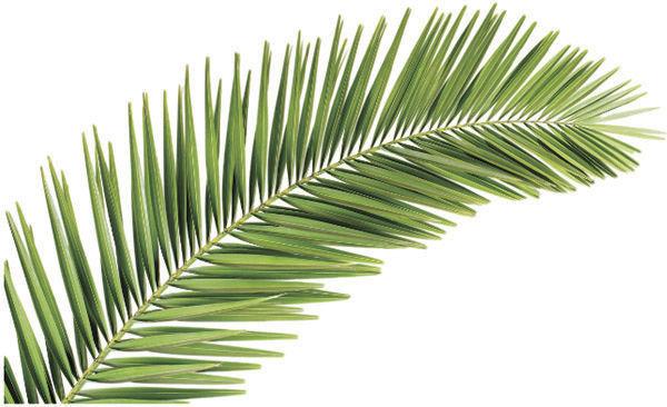2 palm leaf.jpg
