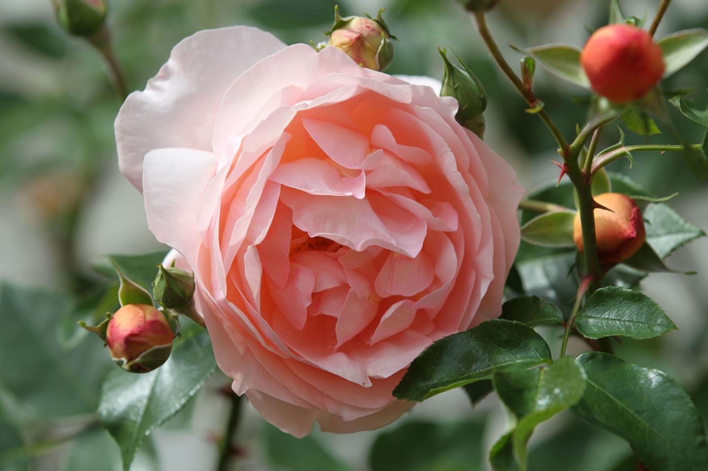 djr-2021-05-02-liv-rose-show-twp4
