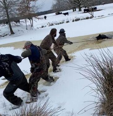 Team pulls heifer from pond