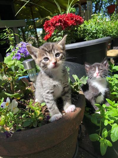 Kittens soak in the sun