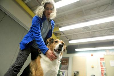 Animal shelter: Keep close eye on dogs at gatherings