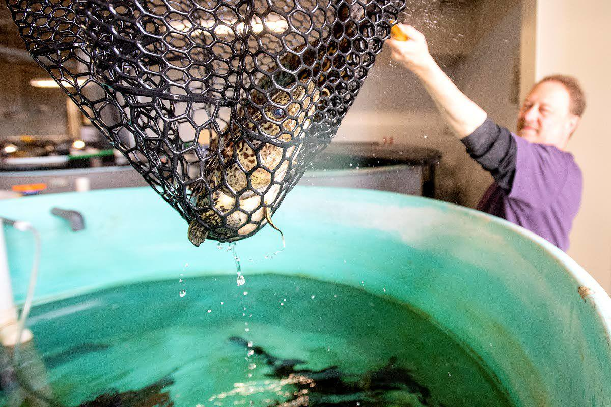 A new home for UI aquaculture research