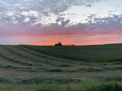 Sunset hays