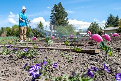 Gardening with flamingos