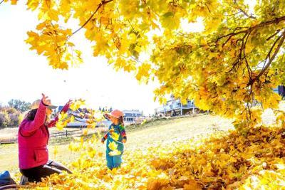 Photo: Golden scene at Sunnyside Park