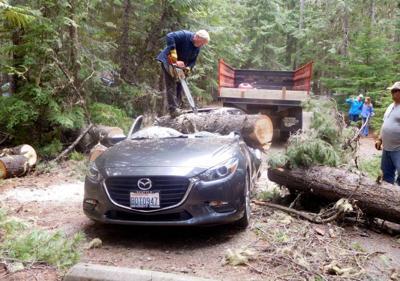 Car struck by tree