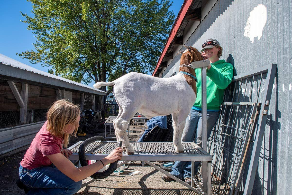 Fair inspires joy in competition