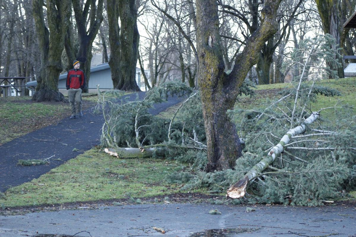 High winds prove tough on trees