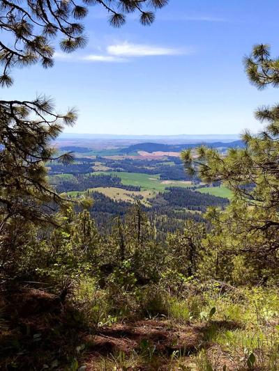 Palouse hills from Moscow Mountain
