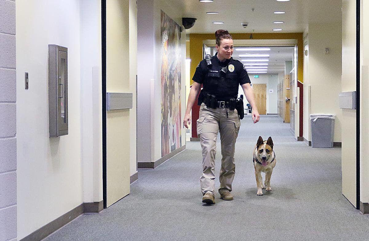 'Unadoptable' dog becomes K-9 with a purpose