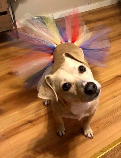 Locals dress pets in tutus to help Humane Society