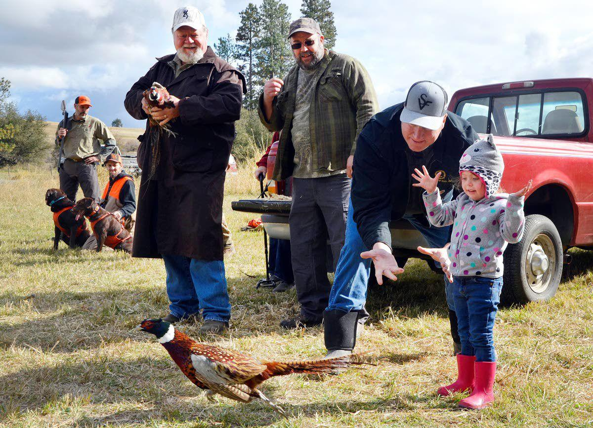 Pheasants find firm foundation with hunters