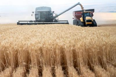 Fine weather pays off with healthy yields