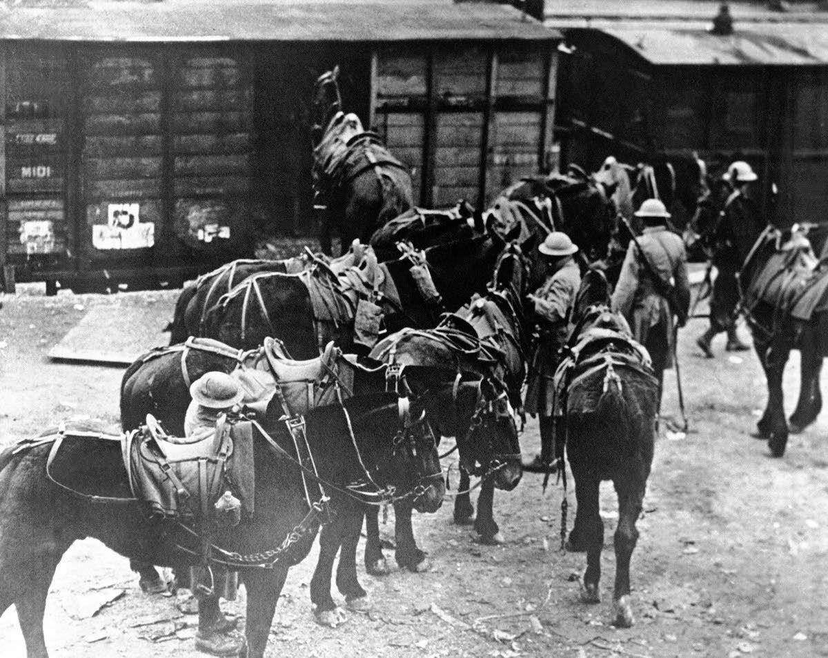 In World War I, horses and veterinarians led difficult lives