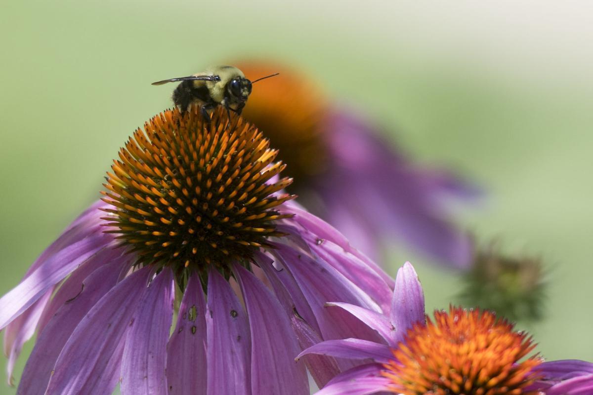 0710_dnr_Pollinators_1