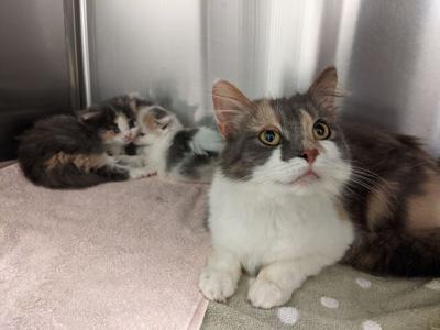 rhspca kitten shower cat family