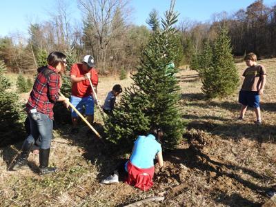 1125_dnr_Christmas Tree Farms1