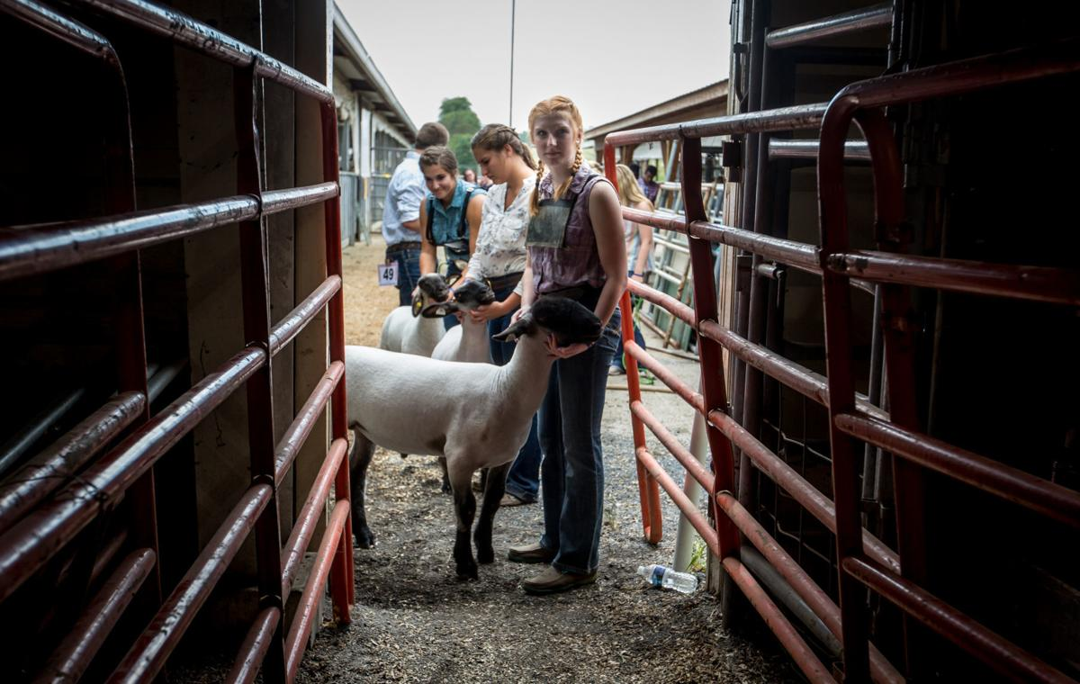 0813_dnr_Fair Lambs_3