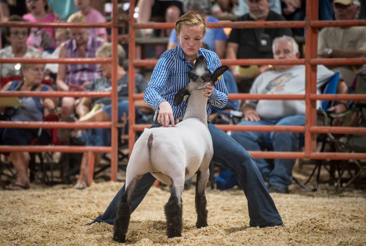 0813_dnr_Fair Lambs_1