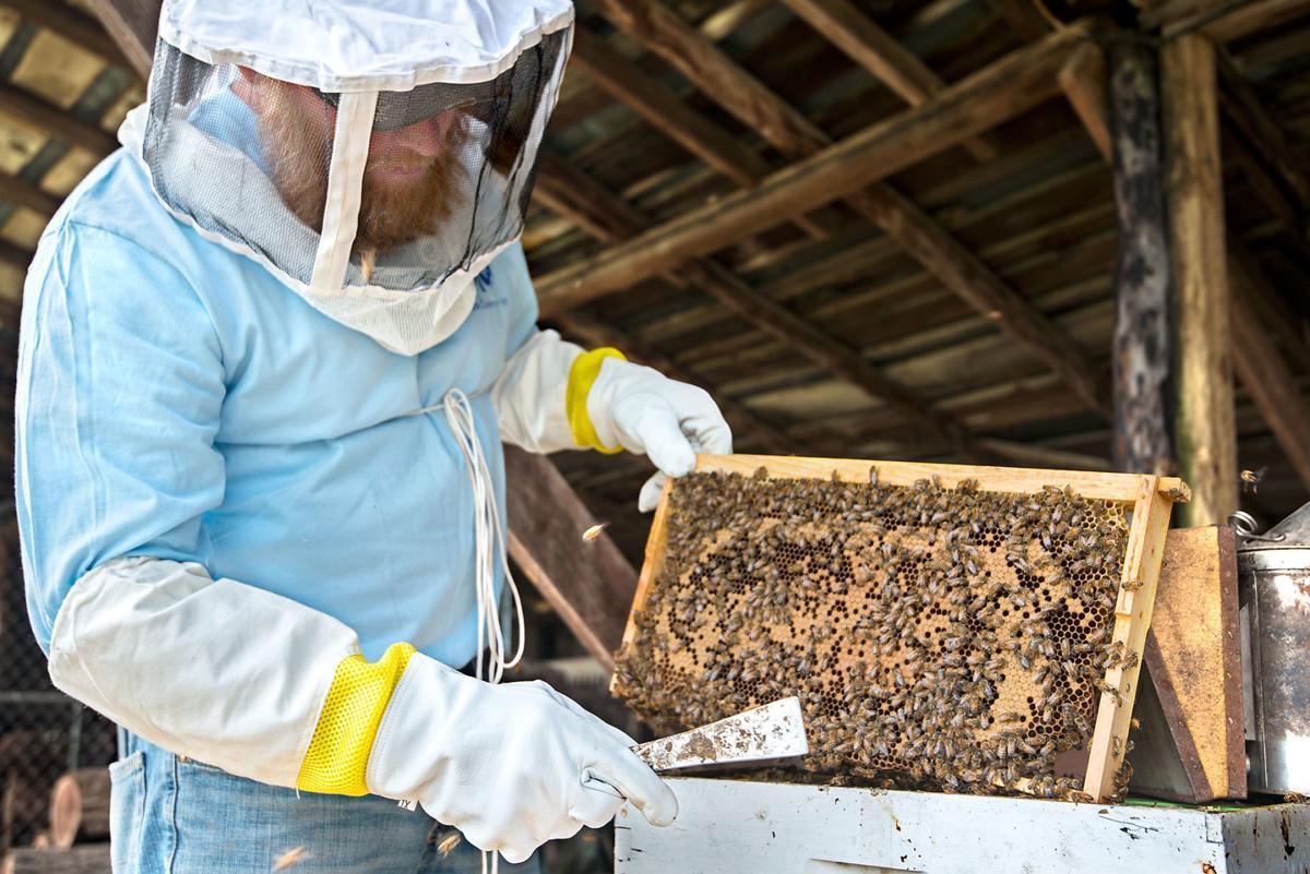 0321_dnr_Bee Keeping_2