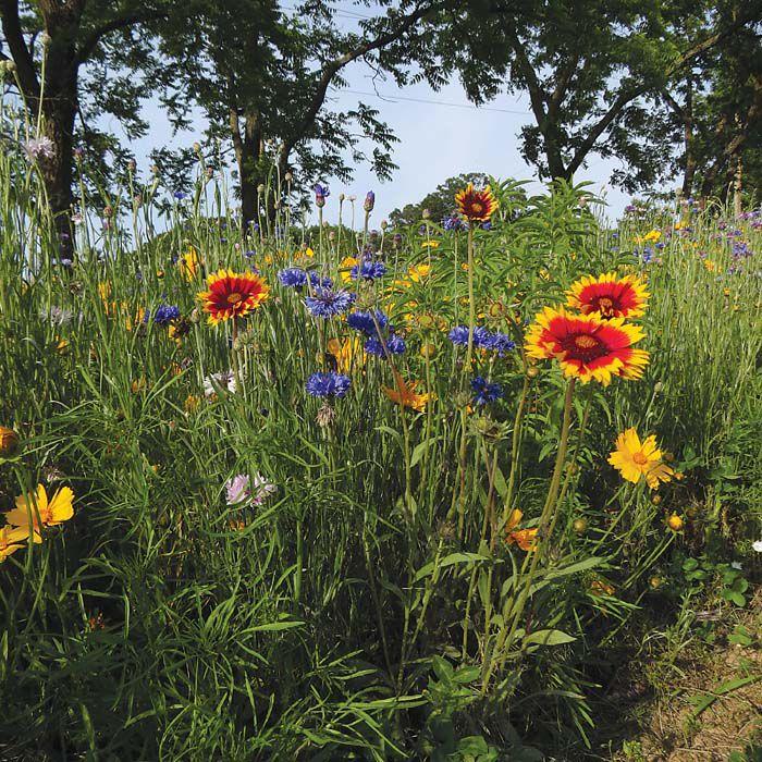 weyers cave wildflower farm marks fifth growing season lifestyle