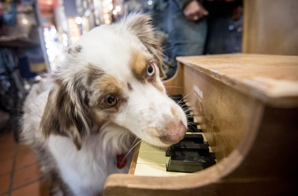 0125_dnr_Piano Dog_
