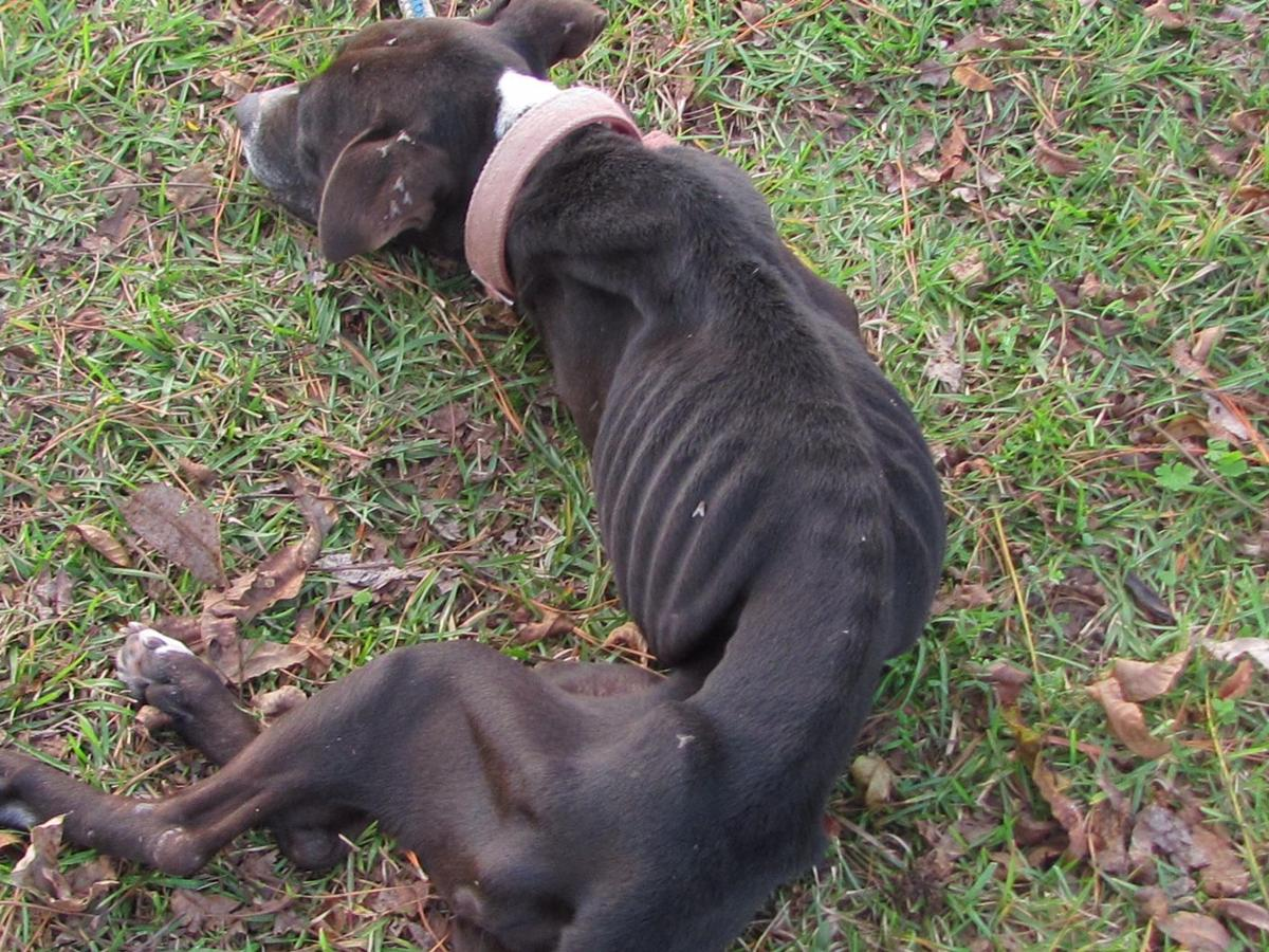 Man Pleads Guilty To Animal Cruelty In Dog Cannibalism