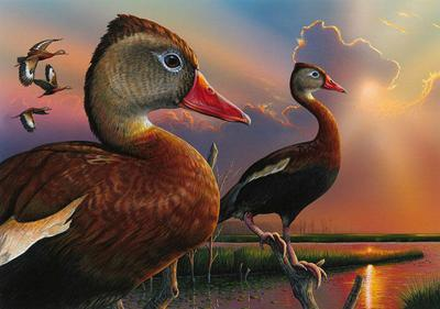 Eddie Leroy's 2019 Federal Duck Stamp art