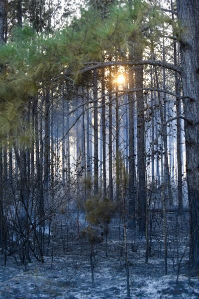 Geneva wildfire oct 10