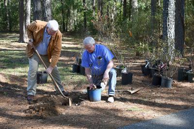 Native azaleas donated to Dothan Area Botanical Gardens