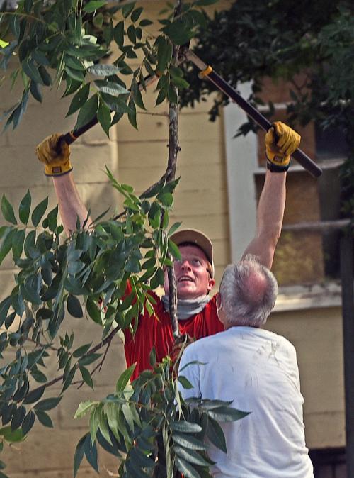 Love Your Neighborhood work project (copy)
