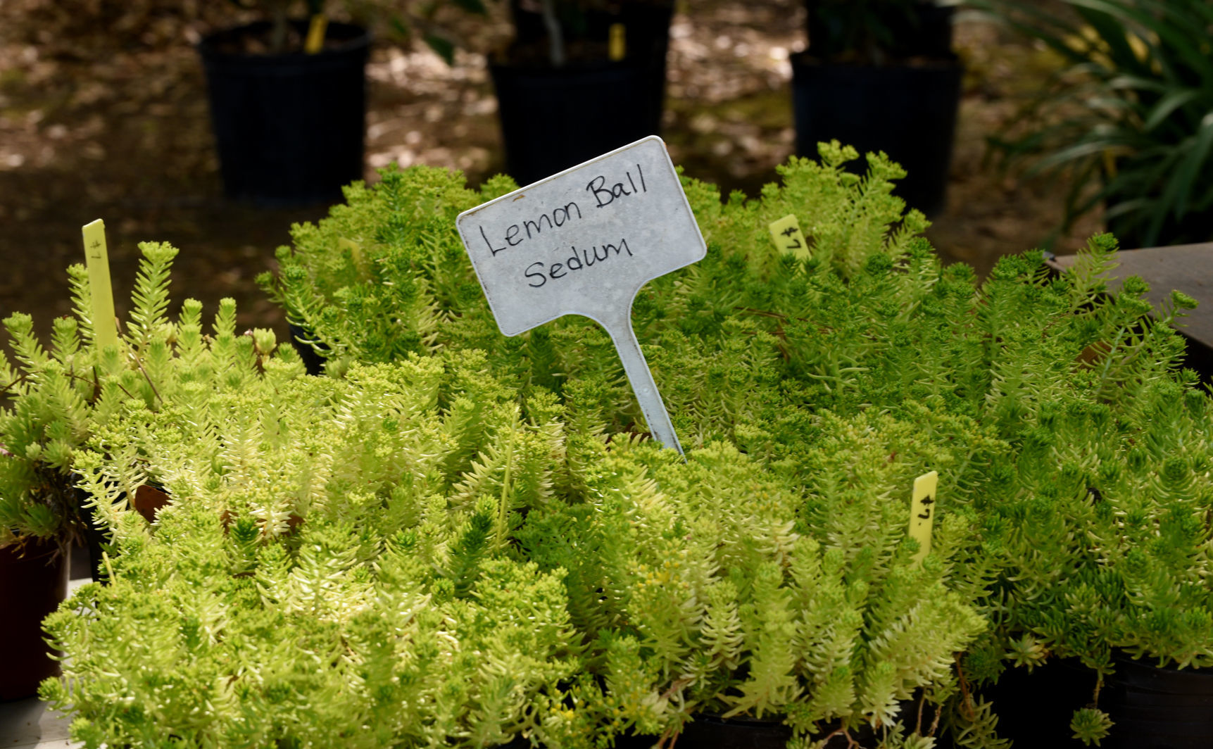 Dothan Area Botanical Gardens Hold Plant Sale March 29 31