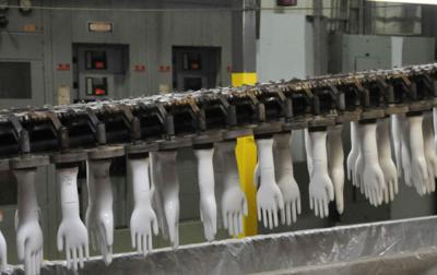 Latex glove plant