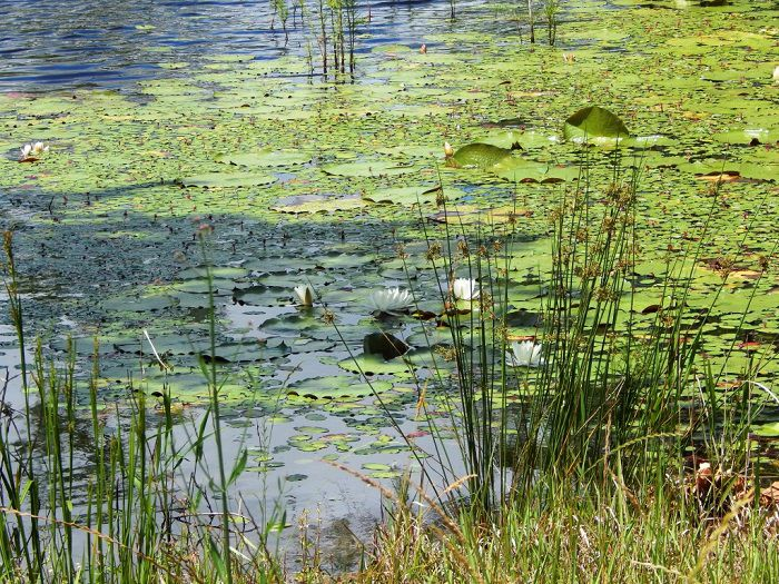 Pond management workshops are may 31 and june 7 local for Local fishing ponds